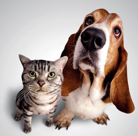 애완동물.jpg