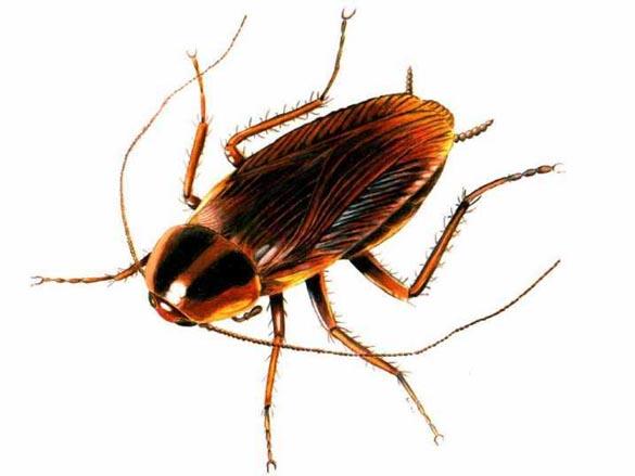 바퀴벌레.jpg