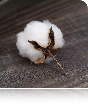 cotton1.png