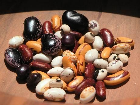 콩2.jpg